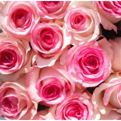 Роза Dolce Vita New (Дольче Вита Нью)