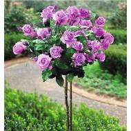 Роза штамбовая Minerva (Минерва) /50-60 см/