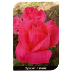 Роза Orient Spice (Ориент Спайс)
