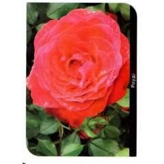 Роза Rody (Роуди)