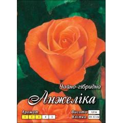Роза Анжелика