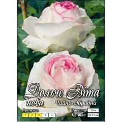 Роза Дольче Вита Нью