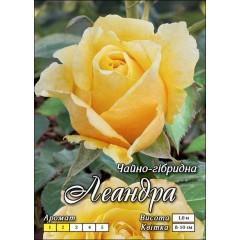Роза Леандра