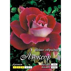 Роза Люксор