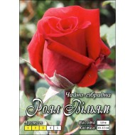 Роза Роял Вильям