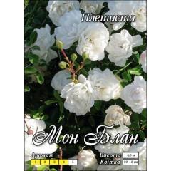 Роза Мон Блан