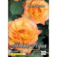Роза Полный месяц