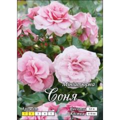 Роза Соня