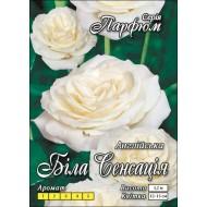 Роза Белая Сенсация