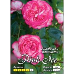 Роза Пинк Айс